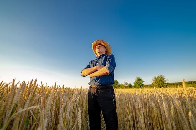 Agricultor sênior fica de mãos cruzadas no campo de ouro. trabalhador profissional da agricultura no trabalho.