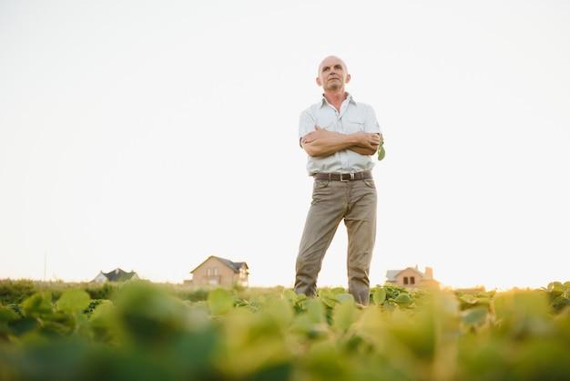 Agricultor sênior no campo de soja examinando a safra