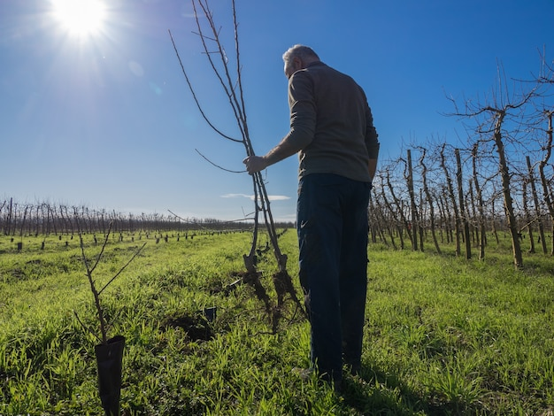 Agricultor sênior por trás do plantio de árvores frutíferas em um dia ensolarado de inverno. conceito de agricultura.