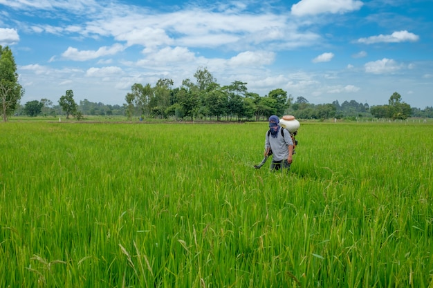 Agricultor tailandês asiático para herbicidas ou fertilizantes químicos equipamento nos campos