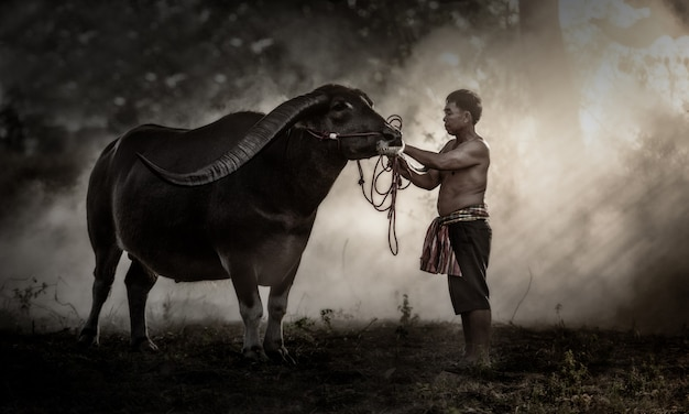 Agricultor tailandês com búfalo