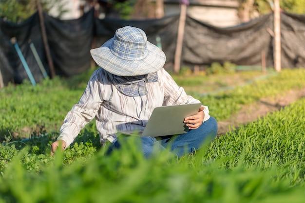 Agricultor tailandês está usando um laptop em uma fazenda de vegetais frescos de ipomeia