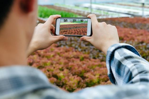 Agricultor tirar foto com o celular digital em hidropônico orgânico