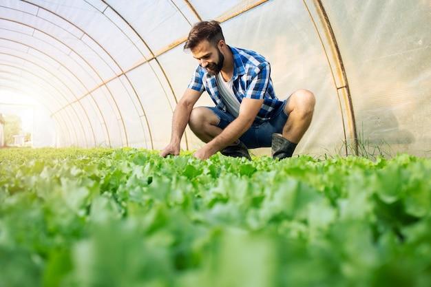 Agricultor trabalhando em fazenda orgânica e produzindo vegetais.