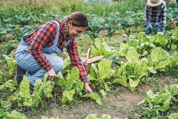 Agricultor trabalhando enquanto apanha uma planta de alface - vida na fazenda e conceito de colheita - foco no rosto da mulher latina