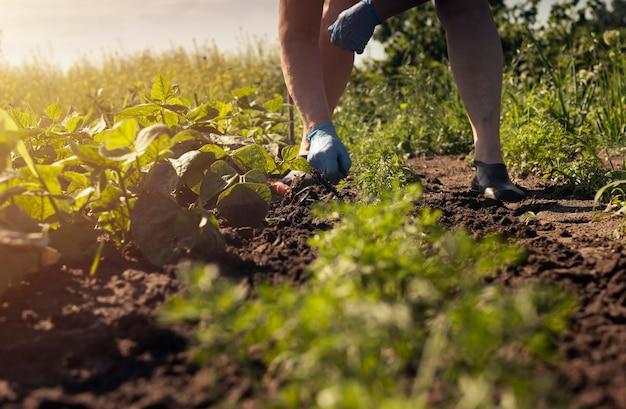 Agricultor trabalhando no solo com a mão na luva e a ferramenta em pé no chão pela manhã