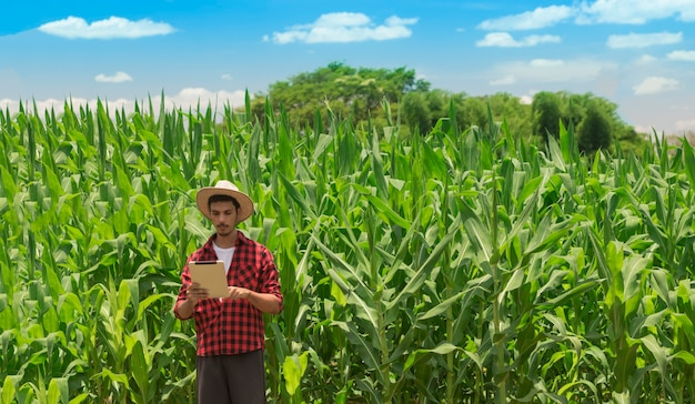 Agricultor usando computador tablet digital em plantação de milho cultivado