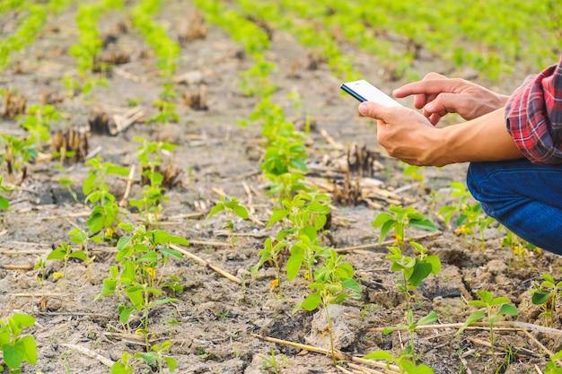 Agricultor usando o relatório de verificação móvel de soja na fazenda com espaço de cópia