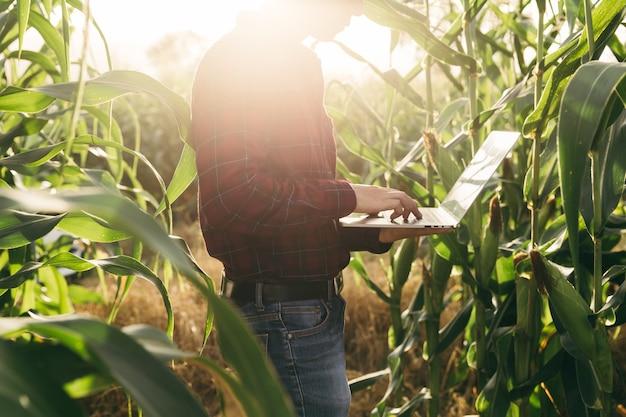Agricultor verificando seus dados de milho pelo laptop na fazenda antes do conceito de colheita, finanças e agricultura.