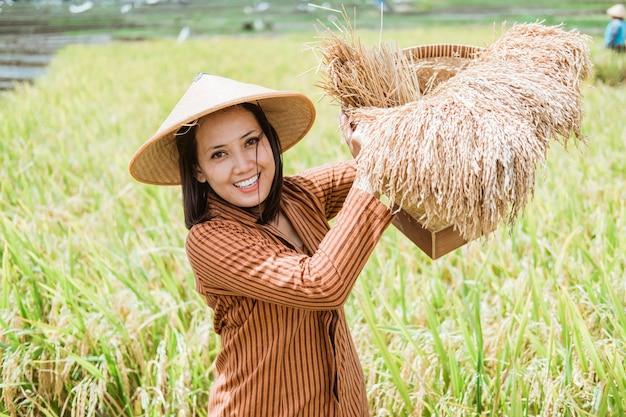 Agricultora asiática com chapéus fica com plantas de arroz em uma cesta de bambu nos campos após a colheita