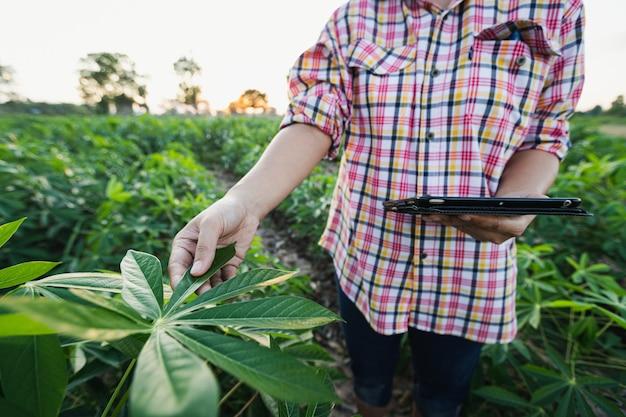 Agricultora asiática tocando a folha da mandioca e segurando um tablet para registrar dados para conduzir pesquisas sobre a qualidade das árvores de mandioca. conceito de agricultura e tecnologia.