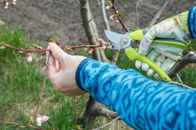 Agricultora cuidando do pomar