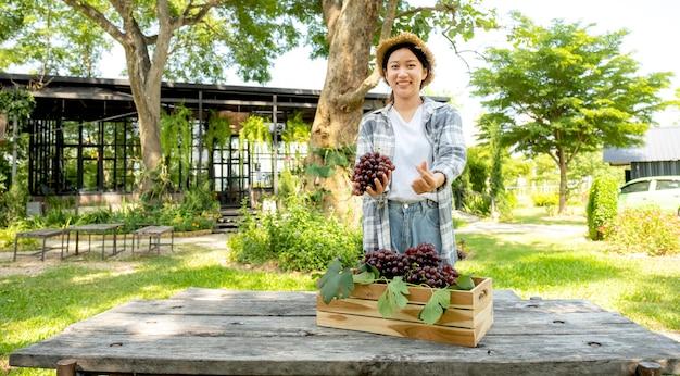 Agricultora jovem ásia faz mini coração e segurando uvas após a colheita forma vinhedo, conceito de fruta saudável.