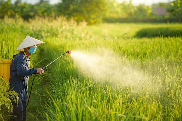 Agricultores asiáticos pulverizam herbicidas no campo