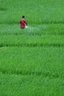 Agricultores de pulverização de insetos em seu campo
