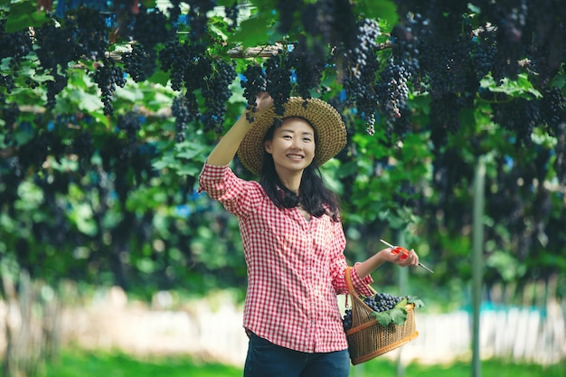 Agricultores de vinhedos que sorriem e apreciam a colheita.
