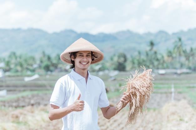Agricultores do sexo masculino seguram as plantas de arroz depois de colhidas nos campos durante o dia