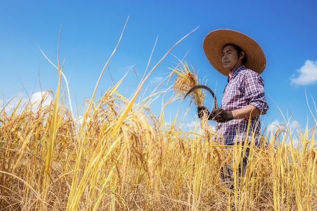 Agricultores em campos de luz solar.