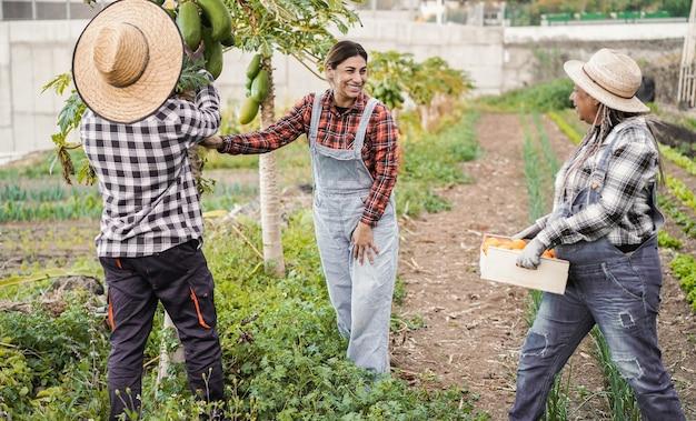 Agricultores multirraciais trabalhando na horta