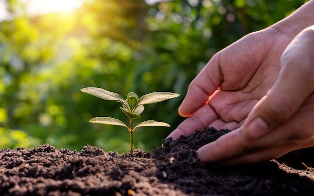 Agricultores plantando árvores e cuidando delas com as mãos dos agricultores