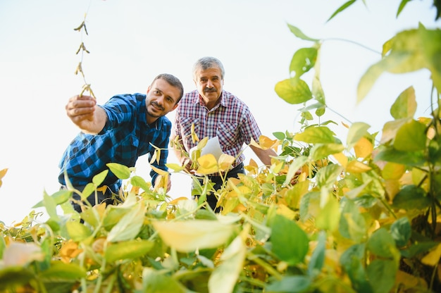 Agricultores trabalhando na plantação, segurando uma pequena muda de soja.