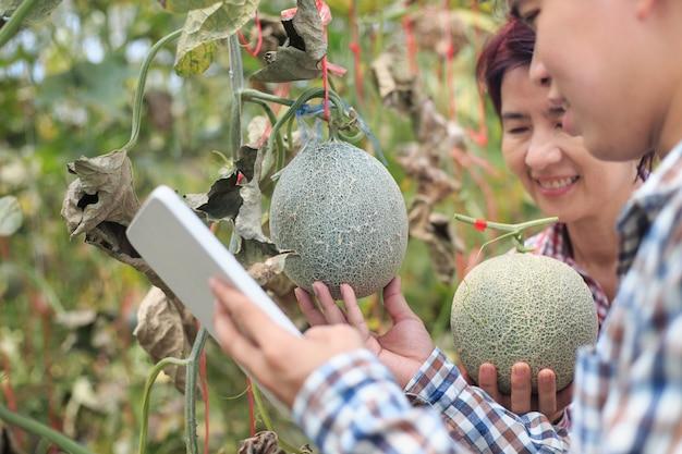 Agricultores, usando um computador tablet, verificam as doenças nocivas em folhas de melão infectadas por míldio.