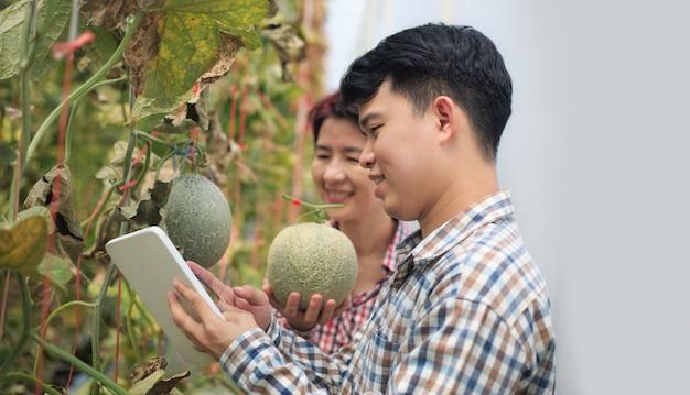 Agricultores, usando um tablet, verificam as doenças nocivas em folhas de melão infectadas por míldio