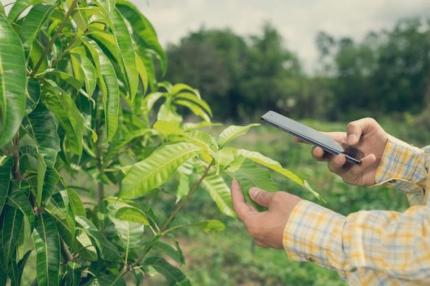 Agricultores verificam a qualidade das árvores no jardim