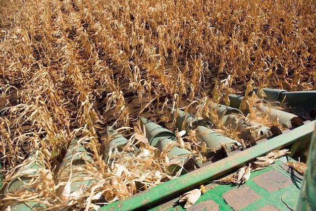 Agricultura aérea. colheita de trigo no outono.