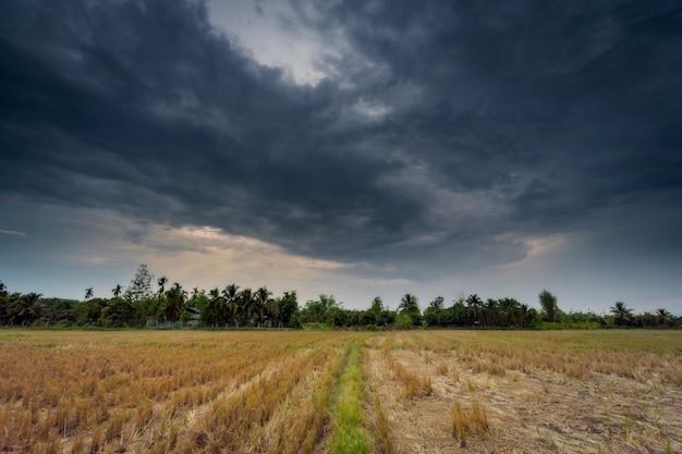 Agricultura de campo e nuvens de chuva com raios solares