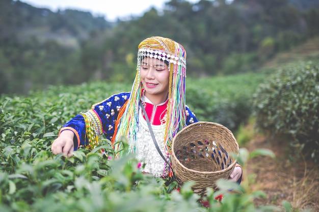 Agricultura de mulheres de hilltribe