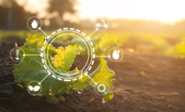 Agricultura de tecnologia digital e conceito de agricultura inteligente.