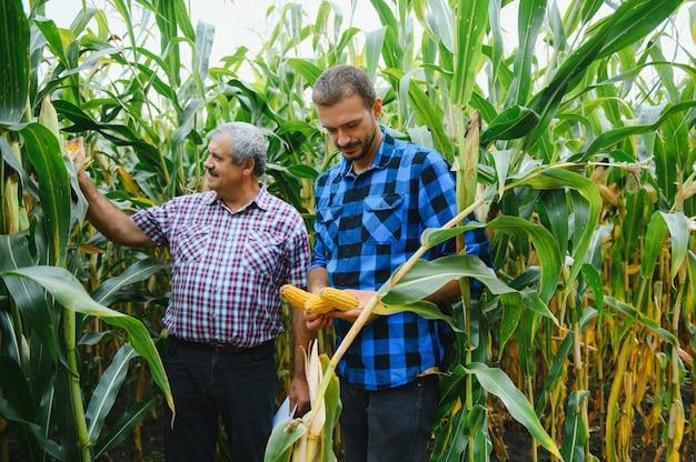 Agricultura familiar. pai e filho de fazendeiros trabalham em um campo de milho. conceito de agricultura.