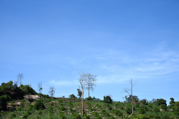 Agricultura na montanha na tailândia