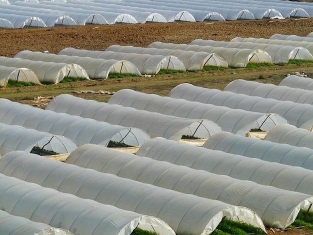 Agricultura o cultivo em estufas berçário