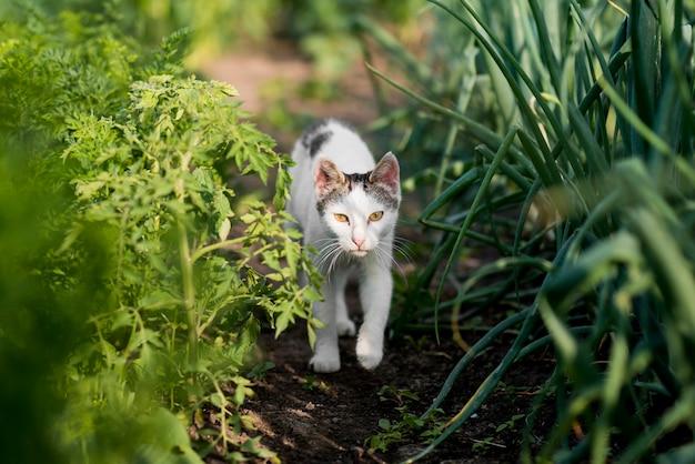 Agricultura orgânica com gato fofo