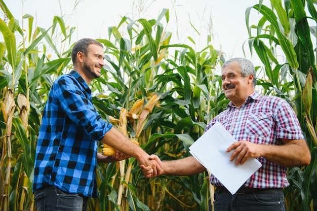 Agrobusines familiares, agricultores em pé em um campo de milho, olhando e apontando para longe, eles estão examinando corp ao pôr do sol
