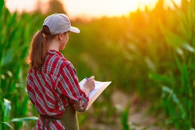 Agrônomo agricultor mulher trabalhando no campo de milho e planejando a renda da colheita. fêmea examinando e verificando o controle de qualidade da safra de milho. gestão da agricultura e agronegócio