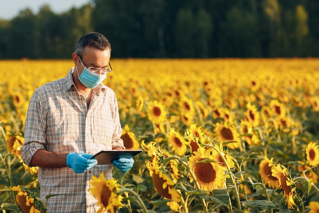 Agrônomo agricultor usando luvas e máscara facial no campo de girassol com tablet, verificando a colheita