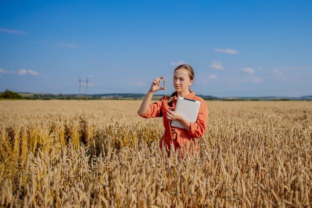 Agrônomo caucasiano verifica a área de cereais e envia dados para a nuvem a partir do tablet.