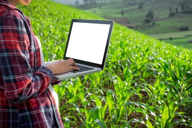 Agrônomo em campo de milho com computador portátil de tela em branco