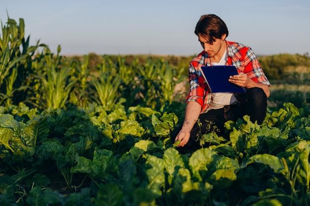 Agrônomo em um campo, assumindo o controle do rendimento e consideração, e toca uma planta