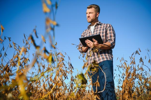 Agrônomo inspeciona safra de soja em campo agrícola - agro conceito - agricultor em plantação de soja na fazenda.