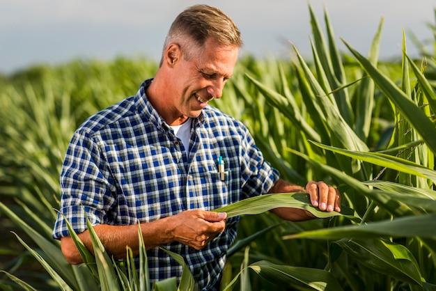 Agrônomo inspecionando atentamente uma folha de milho