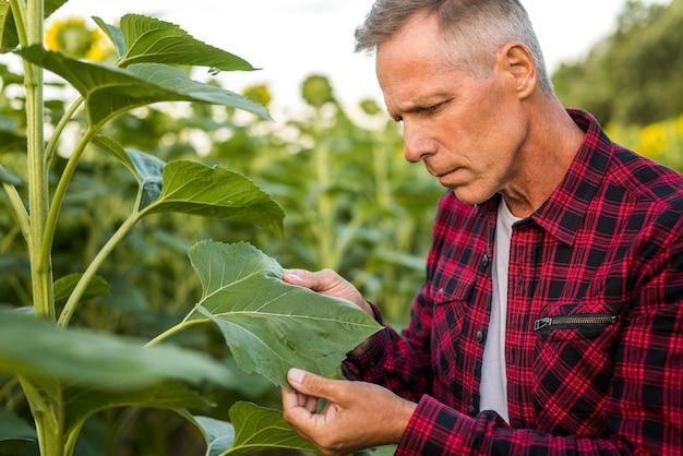 Agrônomo inspecionando atentamente uma folha