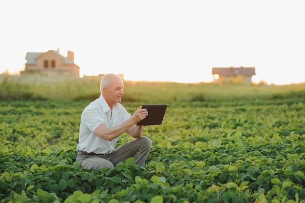 Agrônomo inspecionando safras de soja em cultivo no campo