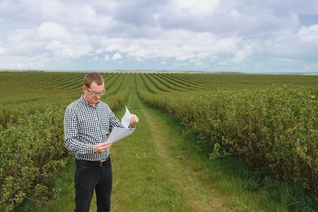 Agrônomo moderno com pasta trabalhando em campo de groselha ao ar livre