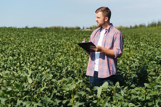 Agrônomo ou agricultor examinando safra de campo de soja