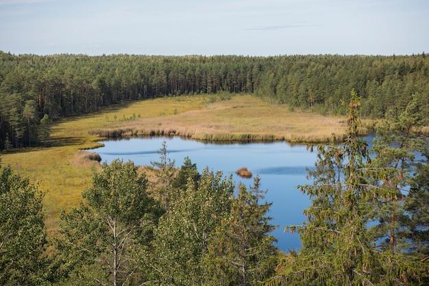Água azul em um lago da floresta com pinheiros