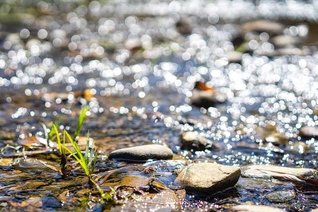 Água cristalina que flui sobre rochas em córregos. riachos na floresta. backgro natureza